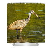 Limpkin With A Snack Shower Curtain