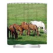 Line Feeding Shower Curtain