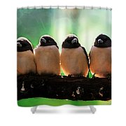 Line Of Birds Shower Curtain