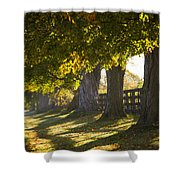 Line Of Maple Trees Along Rural Road In Shower Curtain