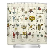 Linne's Plant System Shower Curtain