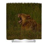 Lion   #1050 Shower Curtain