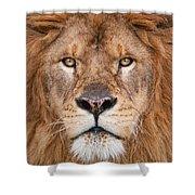 Lion Close Up Shower Curtain