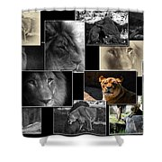 Lion Collage Shower Curtain