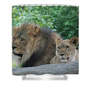 Lion Couple Shower Curtain