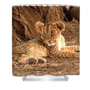 Lion Cub Panthera Leo Shower Curtain