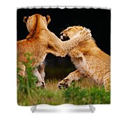 Lion Cubs Playing In The Grass Shower Curtain