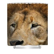 Lion Eyes Shower Curtain