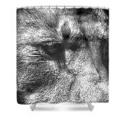 Lion Eyes Shower Curtain