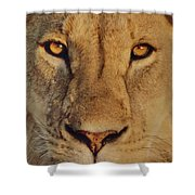 Lion Face  Shower Curtain