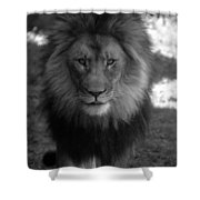 Lion Going For A Haircut Shower Curtain