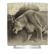 Lion Hugs In Heirloom Finish Shower Curtain