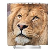 Lion In Deep Thought Shower Curtain