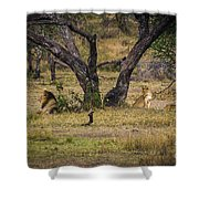 Lion In The Dog House Shower Curtain by Darcy Michaelchuk