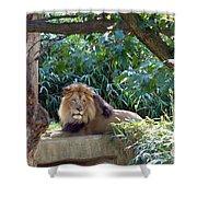 Lion King At Washington Zoo Shower Curtain