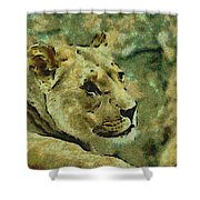 Lion Looking Back Shower Curtain
