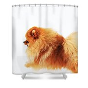 Lion On The Snow Shower Curtain