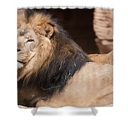 Lion Portrait Of The King Of Beasts Shower Curtain
