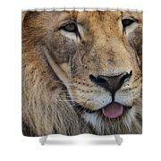 Lion Portrait Panting Shower Curtain