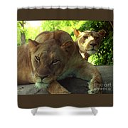 Lioness-00104 Shower Curtain