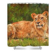 Lioness Shower Curtain by David Stribbling
