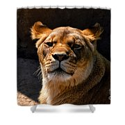 Lioness Hey Are You Looking At Me Shower Curtain