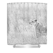 Lioness In Black And White Shower Curtain