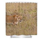Lioness, Kenya Shower Curtain