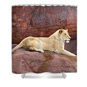 Lioness On A Red Rock Shower Curtain