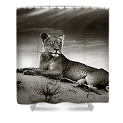 Lioness On Desert Dune Shower Curtain by Johan Swanepoel