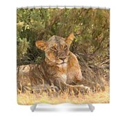 Lioness  Panthera Leo Resting Shower Curtain