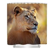 Lioness Portrait Lying In Grass Shower Curtain