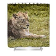Lioness Resting Shower Curtain