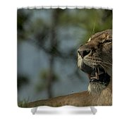 Lioness Voicing Opinion Shower Curtain