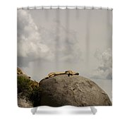 Lions   #8123 Shower Curtain