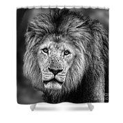 Lion's Eyes Shower Curtain