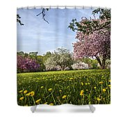 Lions Of The Lawn Shower Curtain