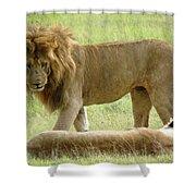 Lions On The Masai Mara Shower Curtain
