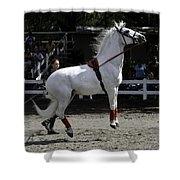 Lipizzaner Stallion Jumping Shower Curtain