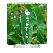 Liquid Lineup Shower Curtain
