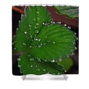 Liquid Pearls On Strawberry Leaves Shower Curtain