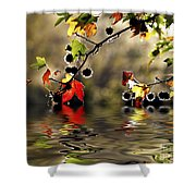 Liquidambar In Flood Shower Curtain
