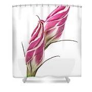 Lisianthus Love Shower Curtain