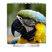 Listining Shower Curtain
