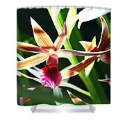 Lit Up Orchid Shower Curtain