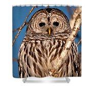 Lit Up Owl Shower Curtain