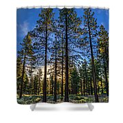 Lit Up Trees Shower Curtain