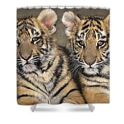 Little Angels Bengal Tigers Endangered Wildlife Rescue Shower Curtain