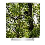 Little Bear Cub In Tree Cades Cove 2 Shower Curtain
