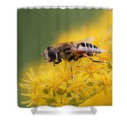 Little Bee Shower Curtain